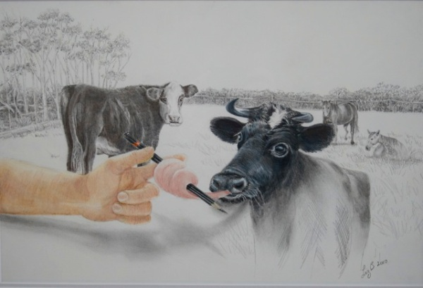 Liz Butcher 3D pencil drawing of cow trying to lick the pencil out of the hand that is drawing him